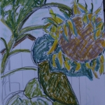 Sukie Curtis-sketch-sunflower and barn